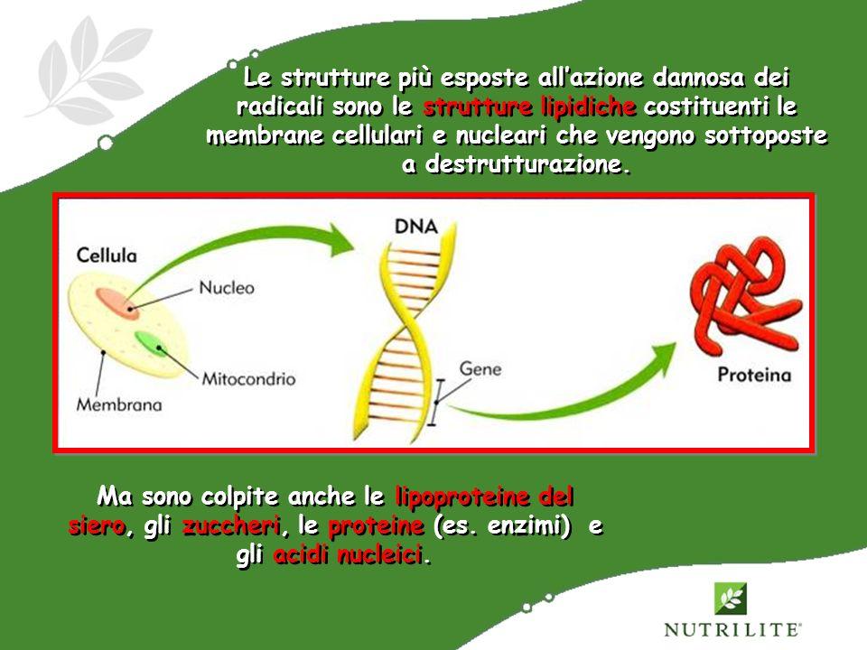 Le strutture più esposte all'azione dannosa dei radicali sono le strutture lipidiche costituenti le membrane cellulari e nucleari che vengono sottoposte a destrutturazione.