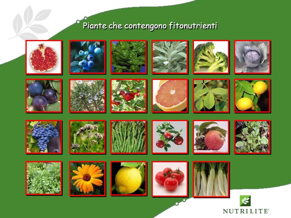 Piante che contengono fitonutrienti