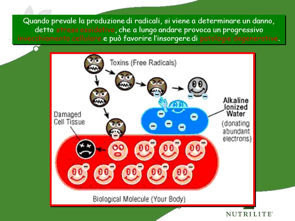 Quando prevale la produzione di radicali, si viene a determinare un danno, detto stress ossidativo, che a lungo andare provoca un progressivo invecchiamento cellulare e può favorire l'insorgere di patologie degenerative.