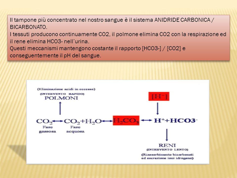 Il tampone più concentrato nel nostro sangue è il sistema ANIDRIDE CARBONICA / BICARBONATO.