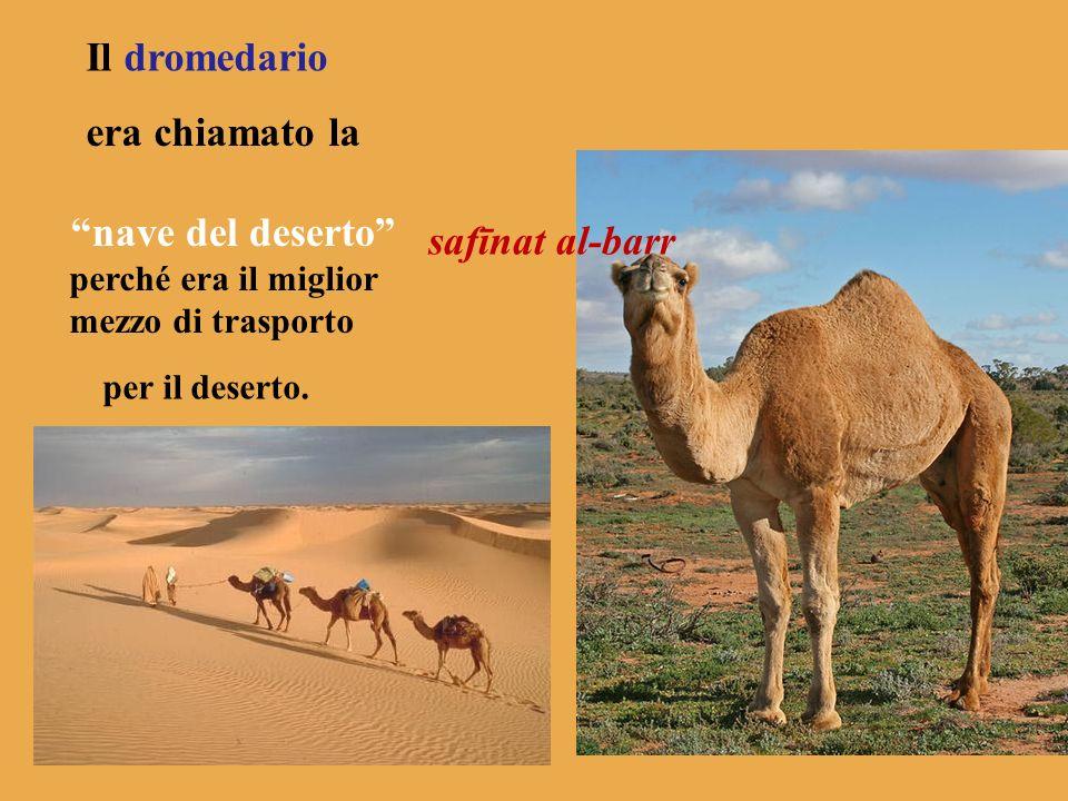 Il dromedario era chiamato la nave del deserto safīnat al-barr