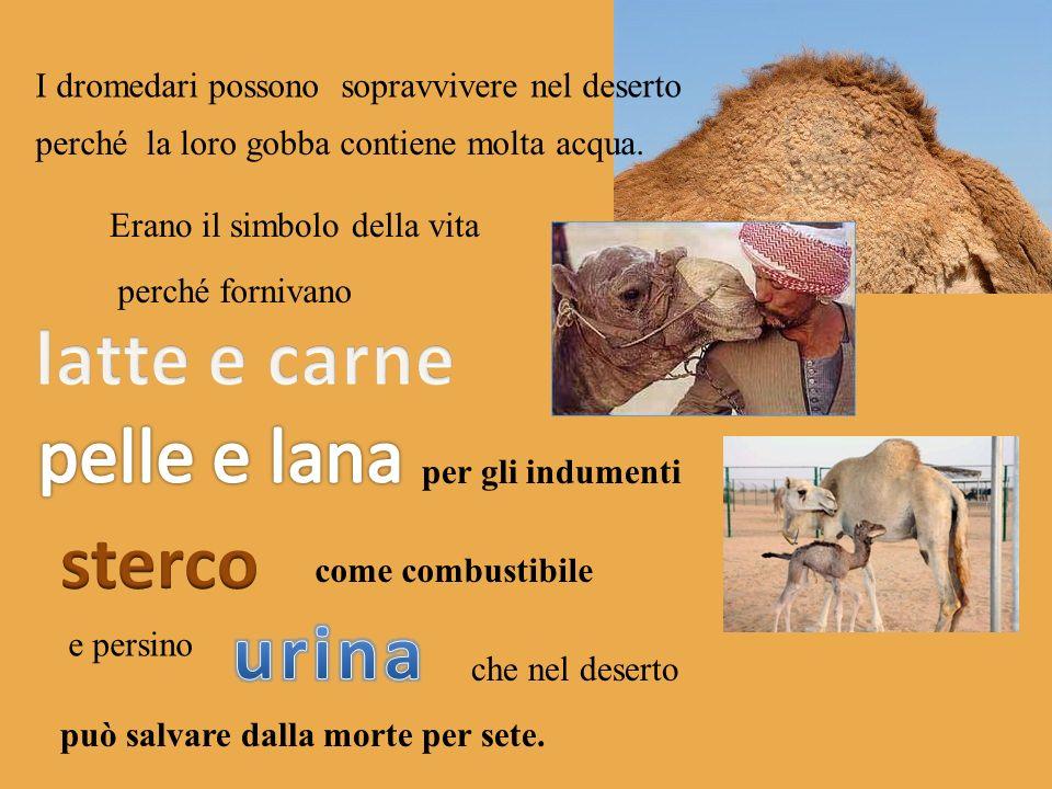 latte e carne sterco urina
