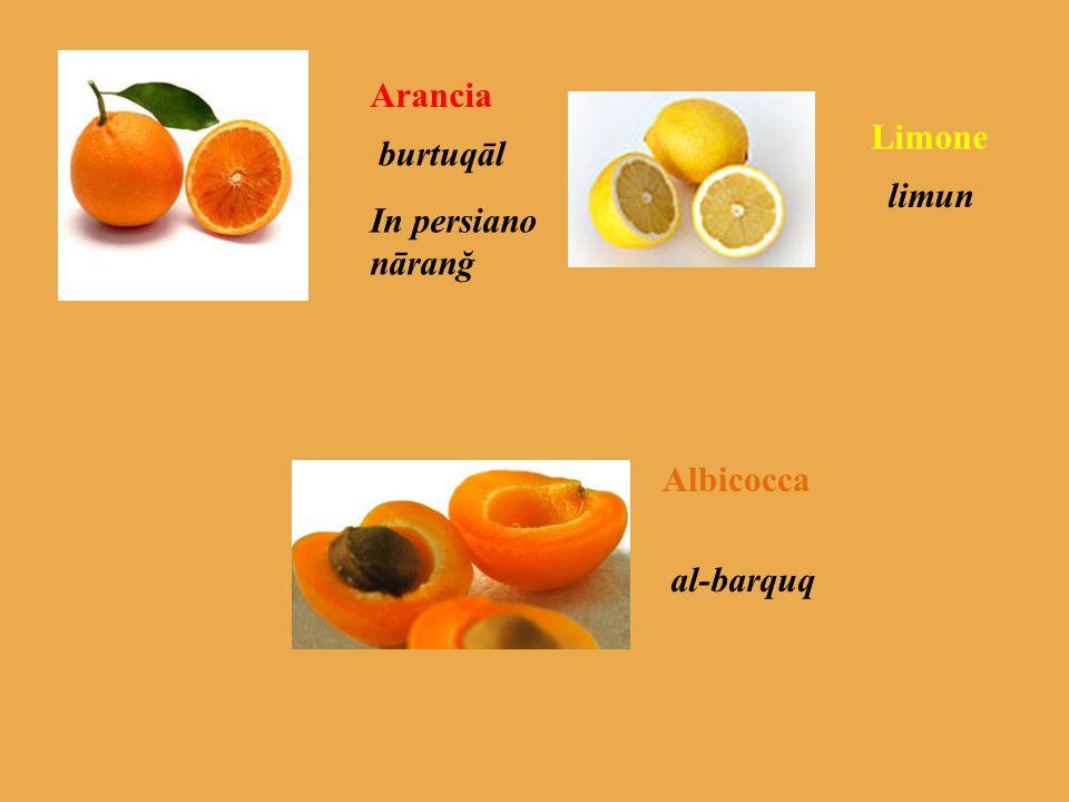 Arancia Limone burtuqāl limun In persiano nāranğ Albicocca al-barquq