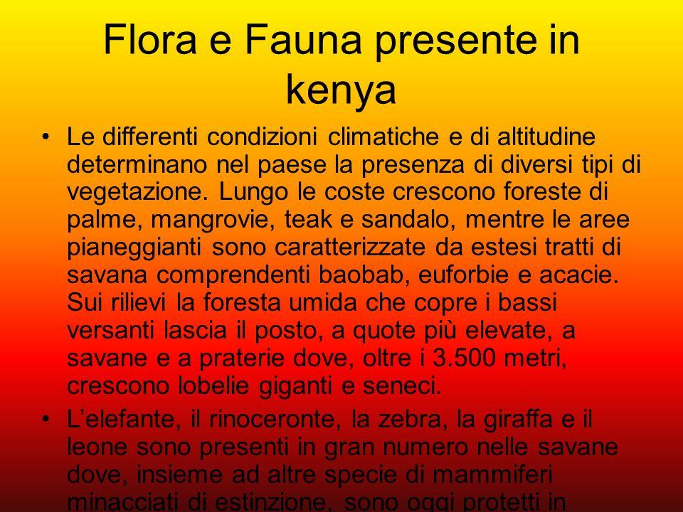 Flora e Fauna presente in kenya