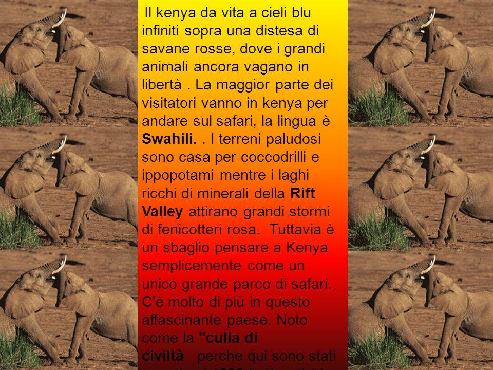 Il kenya da vita a cieli blu infiniti sopra una distesa di savane rosse, dove i grandi animali ancora vagano in libertà .