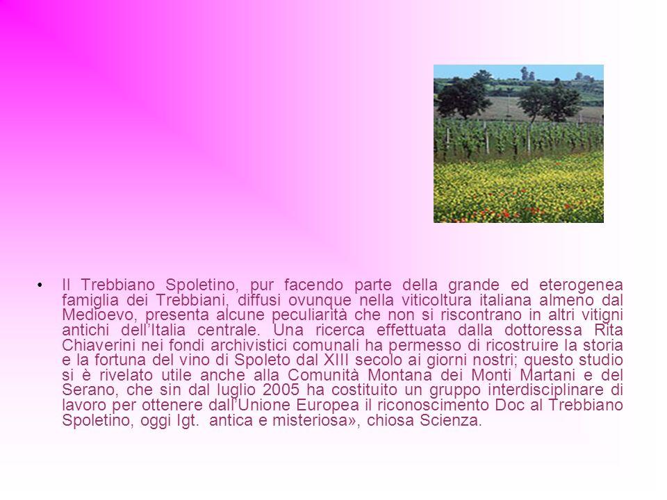 Il Trebbiano Spoletino, pur facendo parte della grande ed eterogenea famiglia dei Trebbiani, diffusi ovunque nella viticoltura italiana almeno dal Medioevo, presenta alcune peculiarità che non si riscontrano in altri vitigni antichi dell'Italia centrale.