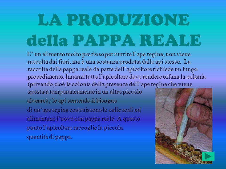 LA PRODUZIONE della PAPPA REALE