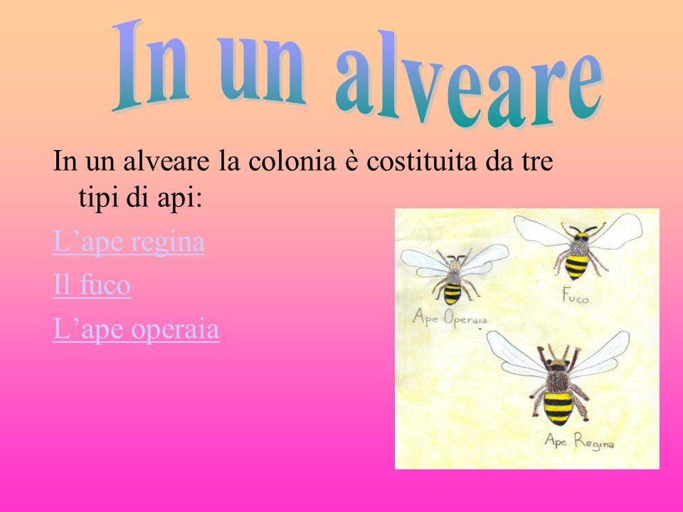 In un alveare In un alveare la colonia è costituita da tre tipi di api: L'ape regina.