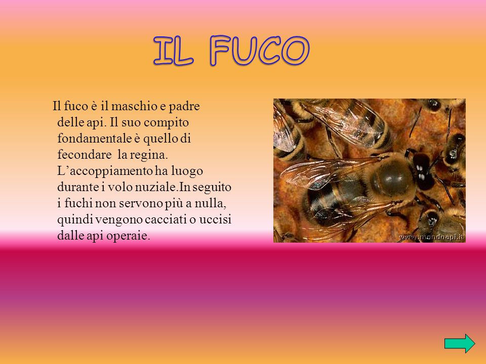 IL FUCO