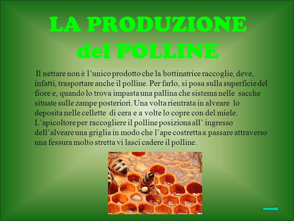 LA PRODUZIONE del POLLINE