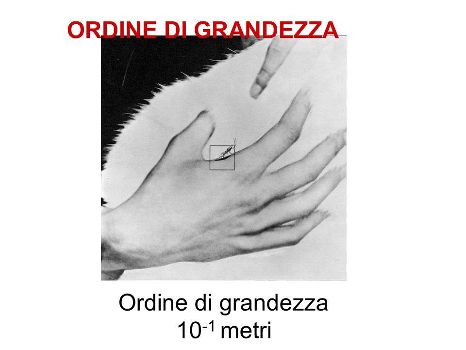 Ordine di grandezza 10-1 metri