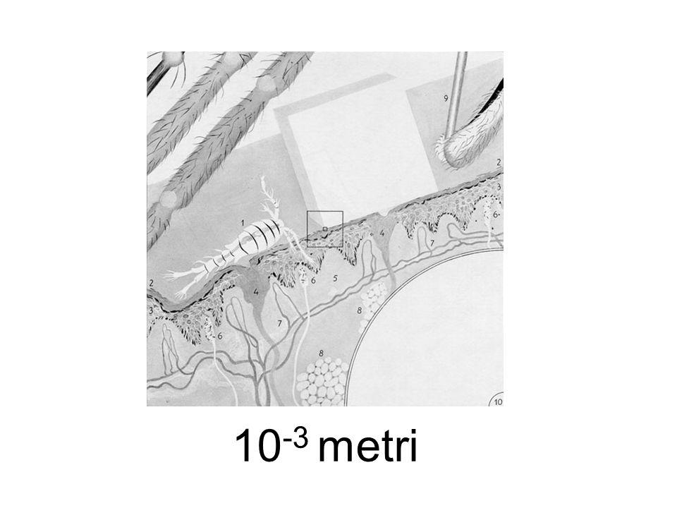 10-3 metri