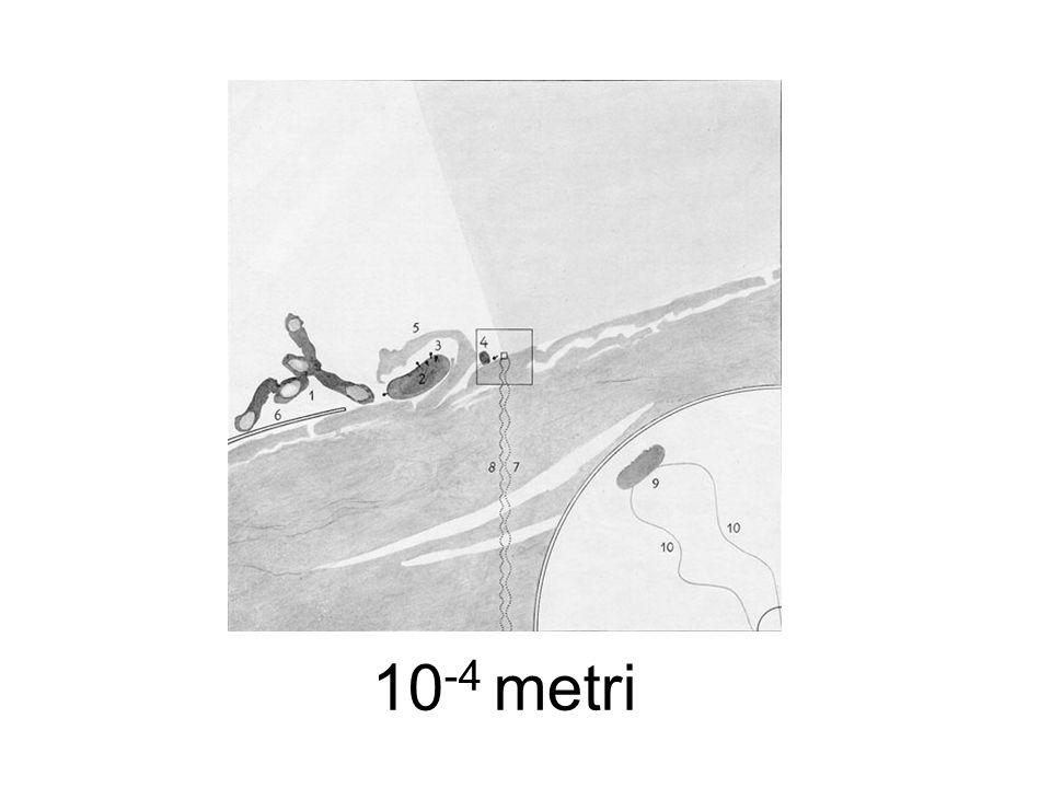 10-4 metri