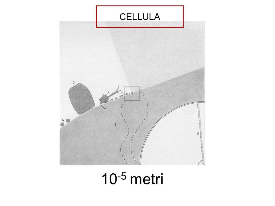 CELLULA 10-5 metri