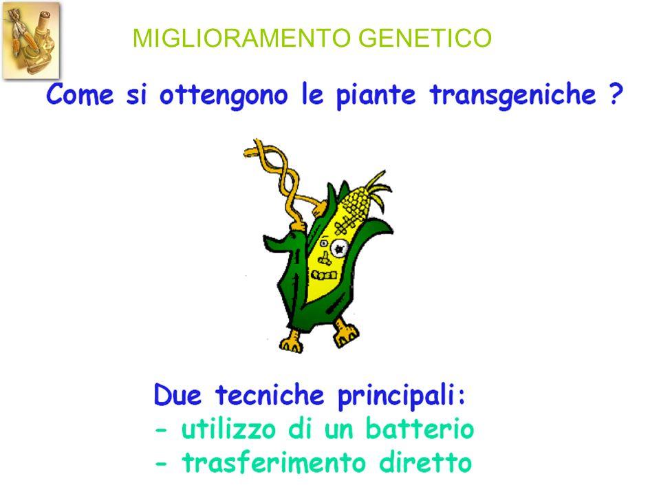 MIGLIORAMENTO GENETICO
