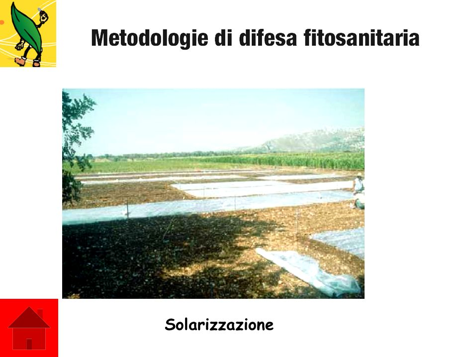 Solarizzazione
