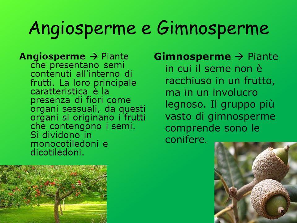 Angiosperme e Gimnosperme