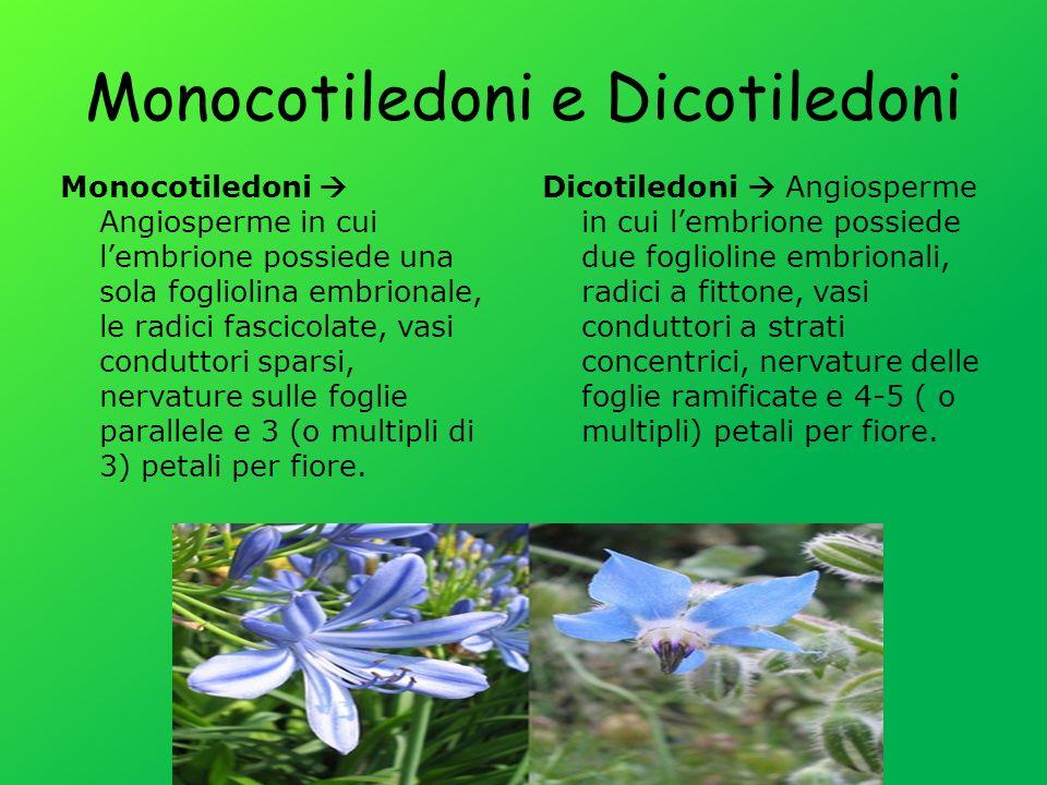 Monocotiledoni e Dicotiledoni
