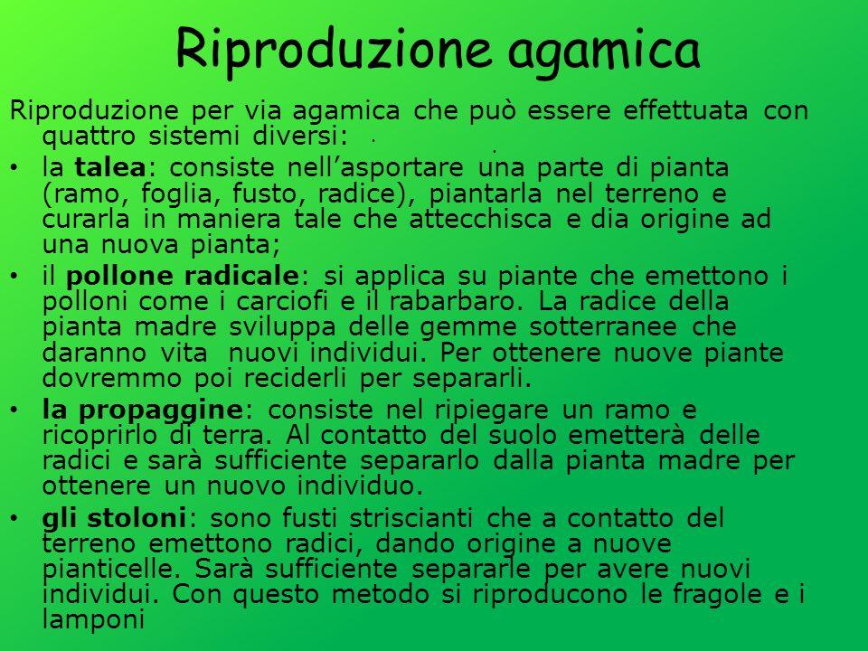 Riproduzione agamica Riproduzione per via agamica che può essere effettuata con quattro sistemi diversi: