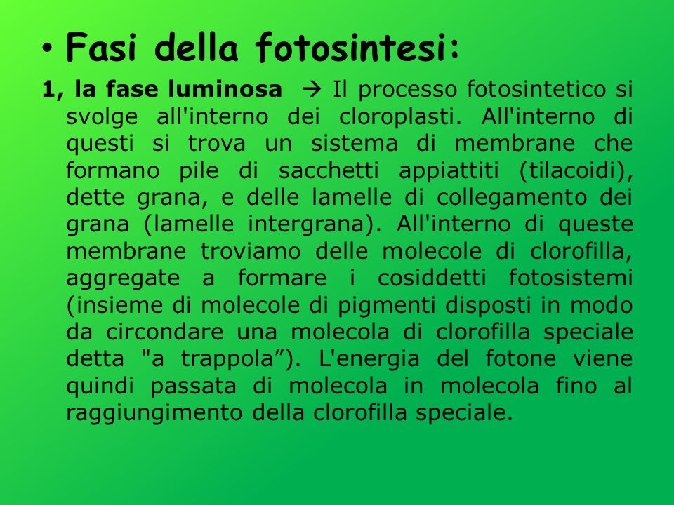 Fasi della fotosintesi: