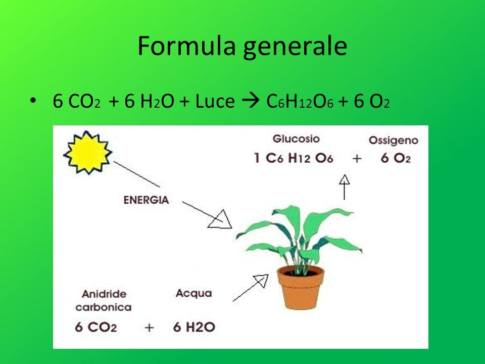 Formula generale 6 CO2 + 6 H2O + Luce  C6H12O6 + 6 O2