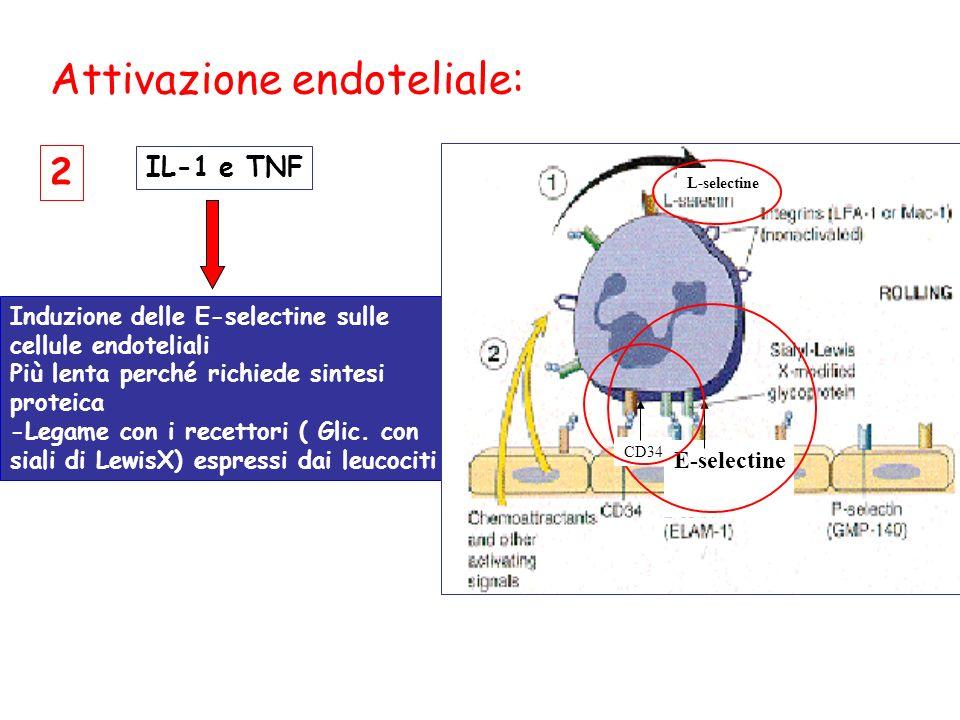 Attivazione endoteliale: