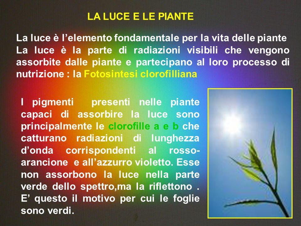 LA LUCE E LE PIANTE La luce è l'elemento fondamentale per la vita delle piante.