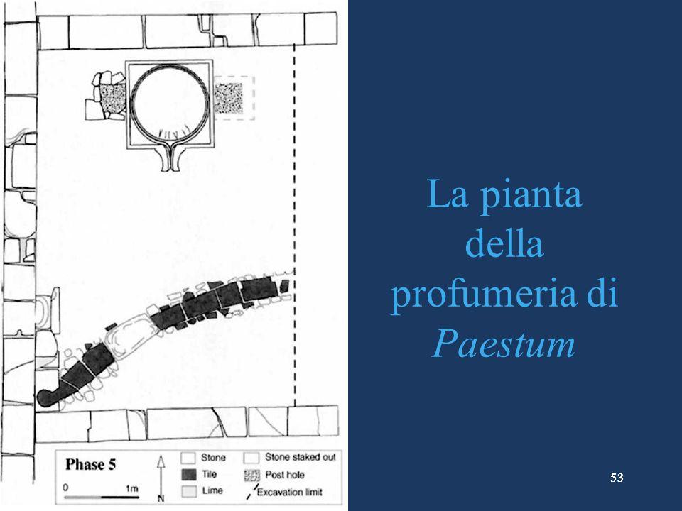 La pianta della profumeria di Paestum