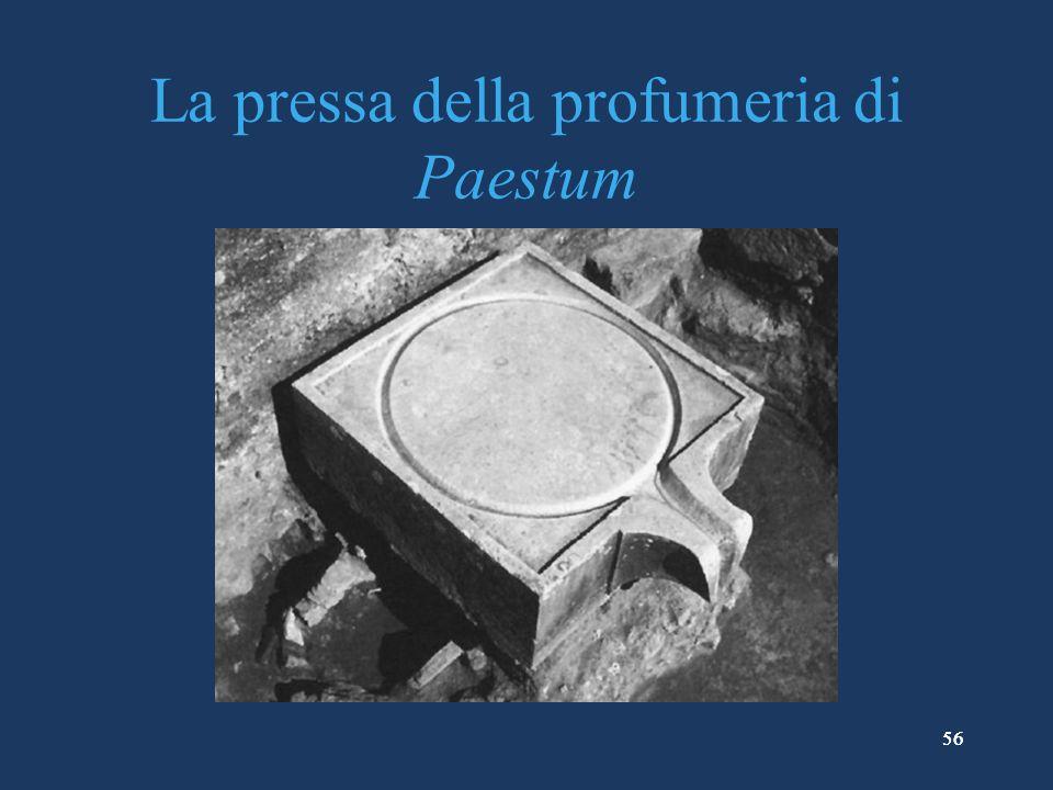 La pressa della profumeria di Paestum