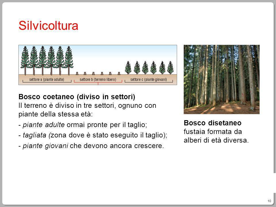 Silvicoltura Bosco coetaneo (diviso in settori) Il terreno è diviso in tre settori, ognuno con piante della stessa età: