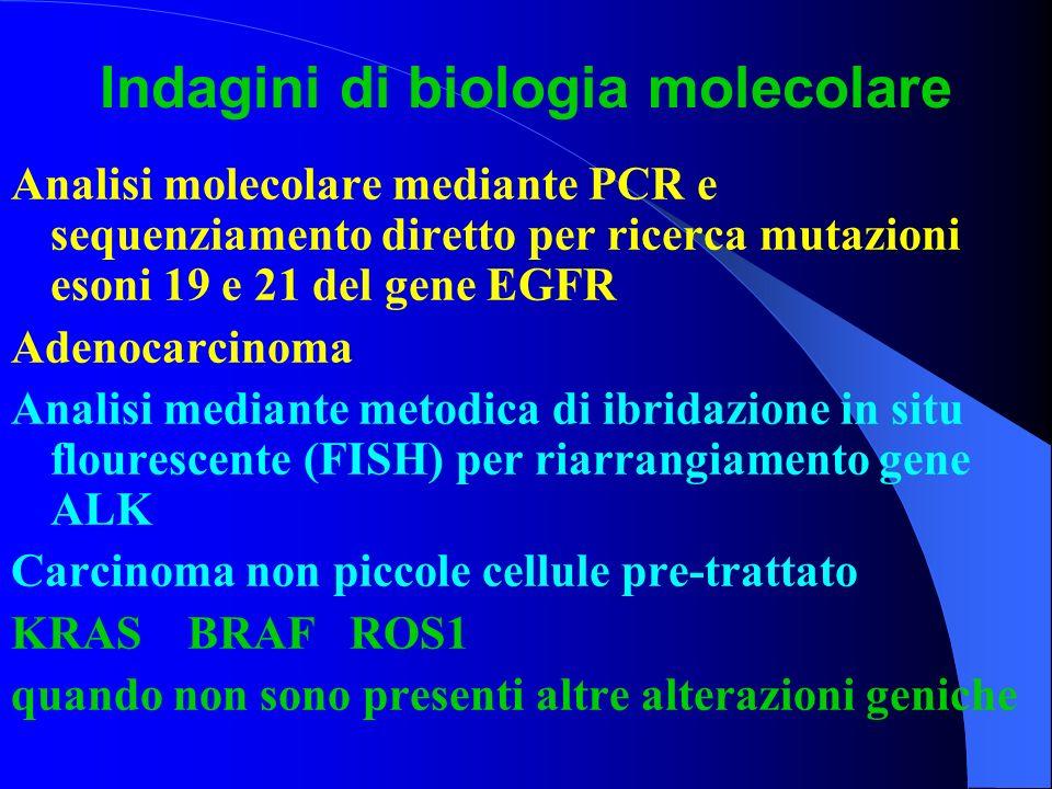 Indagini di biologia molecolare