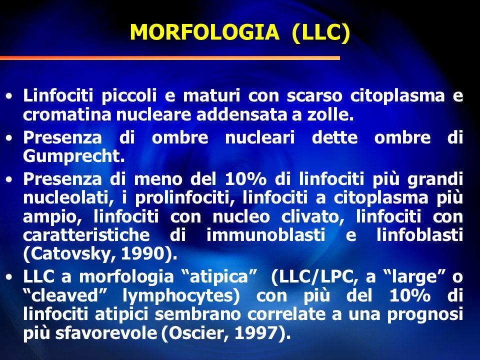 MORFOLOGIA (LLC) Linfociti piccoli e maturi con scarso citoplasma e cromatina nucleare addensata a zolle.