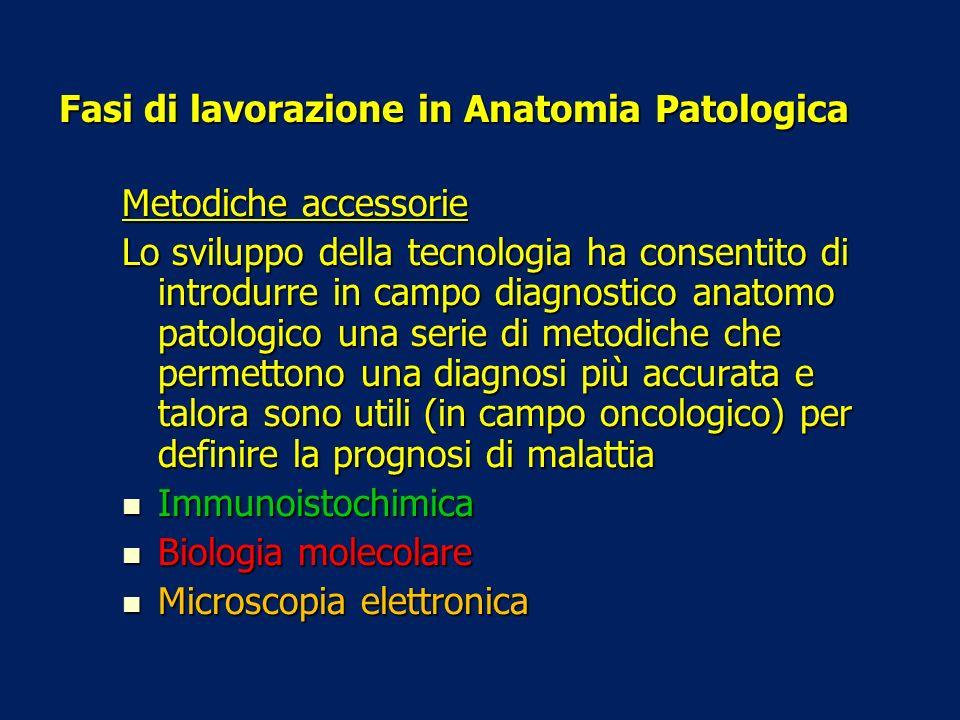 Fasi di lavorazione in Anatomia Patologica