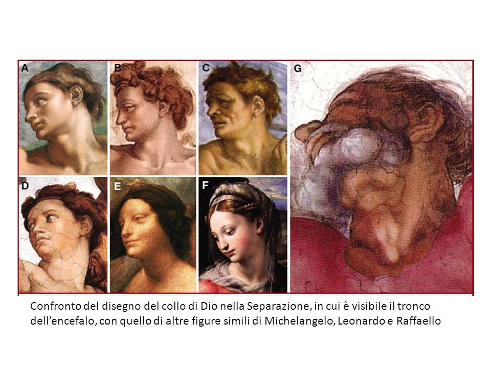 Confronto del disegno del collo di Dio nella Separazione, in cui è visibile il tronco dell'encefalo, con quello di altre figure simili di Michelangelo, Leonardo e Raffaello