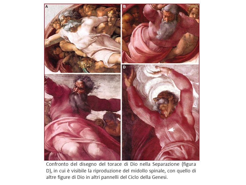 Confronto del disegno del torace di Dio nella Separazione (figura D), in cui è visibile la riproduzione del midollo spinale, con quello di altre figure di Dio in altri pannelli del Ciclo della Genesi.