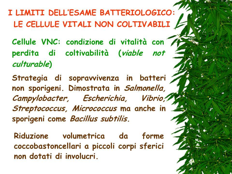 I LIMITI DELL'ESAME BATTERIOLOGICO: LE CELLULE VITALI NON COLTIVABILI