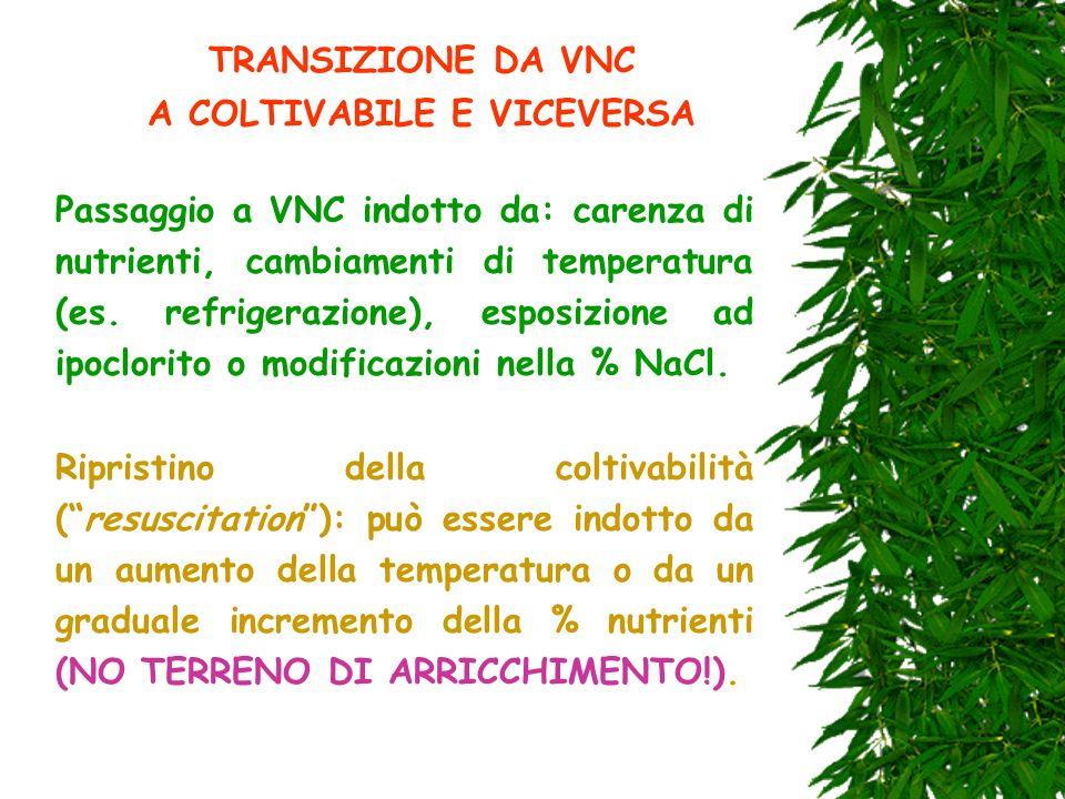 TRANSIZIONE DA VNC A COLTIVABILE E VICEVERSA