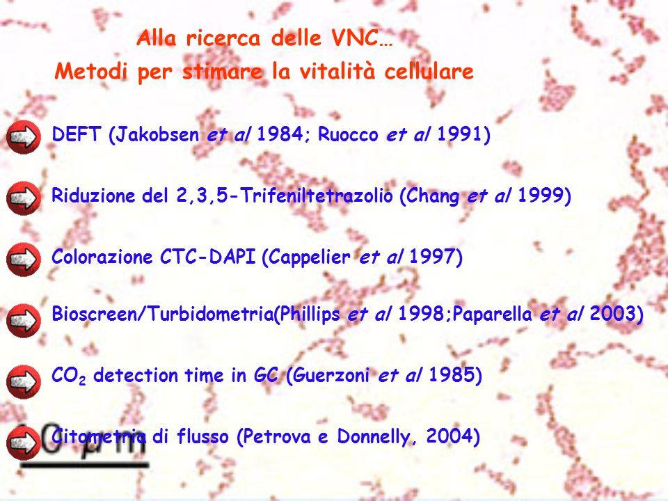 Alla ricerca delle VNC… Metodi per stimare la vitalità cellulare