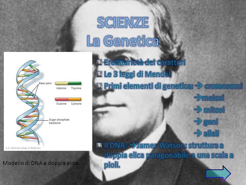 SCIENZE La Genetica Ereditarietà dei caratteri Le 3 leggi di Mendel
