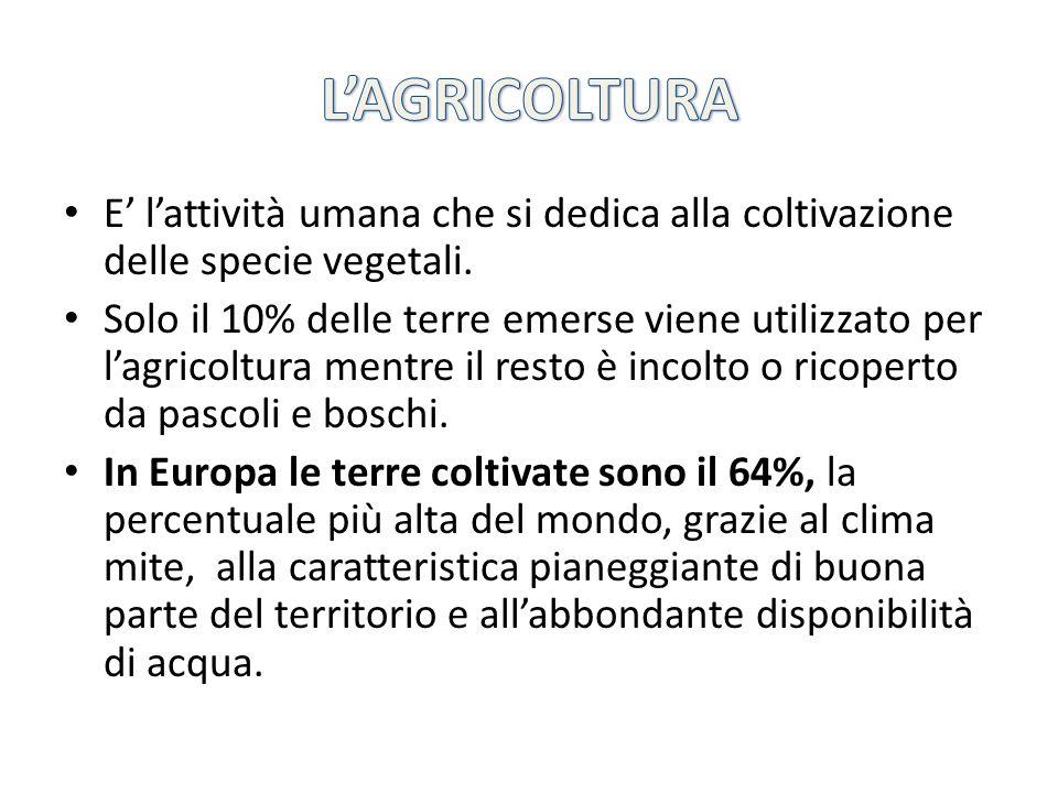 L'AGRICOLTURA E' l'attività umana che si dedica alla coltivazione delle specie vegetali.