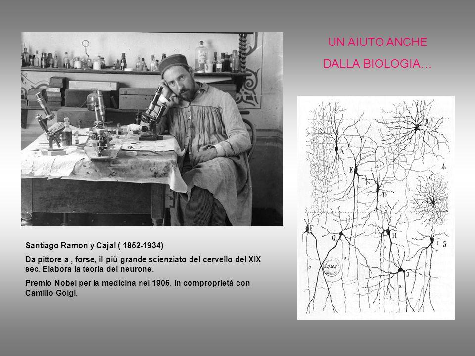 UN AIUTO ANCHE DALLA BIOLOGIA… Santiago Ramon y Cajal ( 1852-1934)