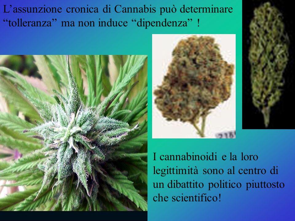 L'assunzione cronica di Cannabis può determinare tolleranza ma non induce dipendenza !