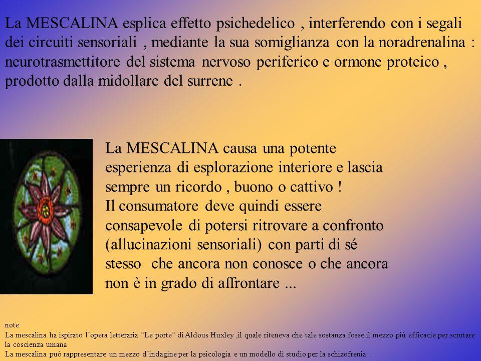 La MESCALINA esplica effetto psichedelico , interferendo con i segali dei circuiti sensoriali , mediante la sua somiglianza con la noradrenalina : neurotrasmettitore del sistema nervoso periferico e ormone proteico , prodotto dalla midollare del surrene .