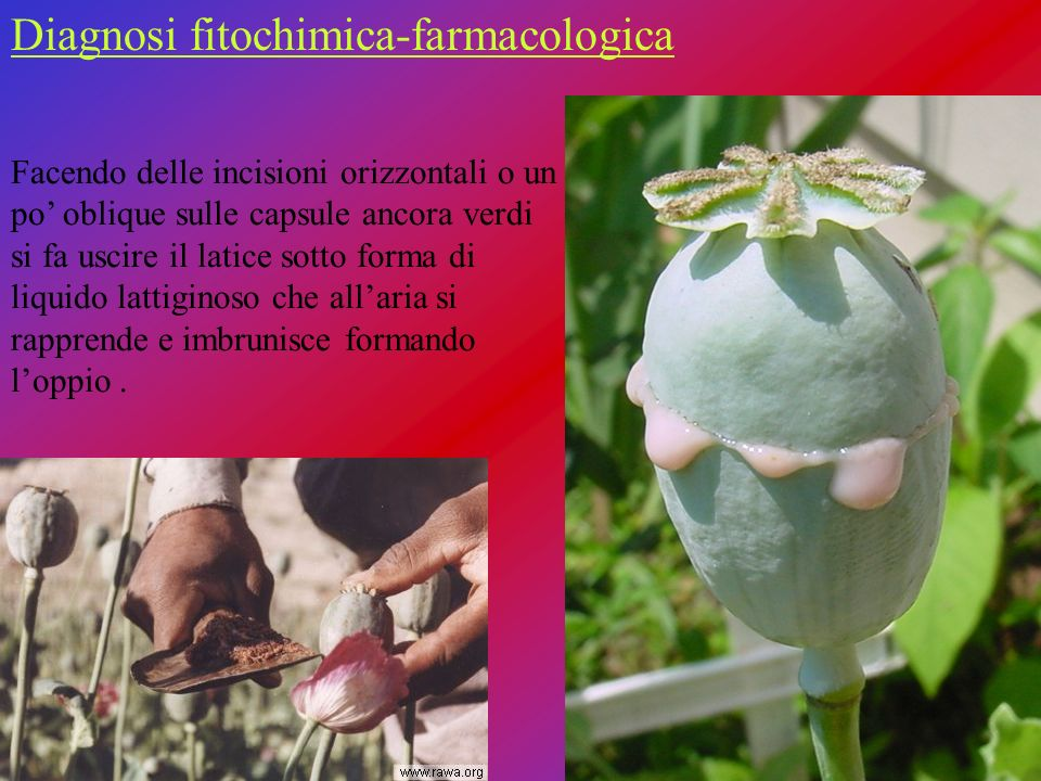 Diagnosi fitochimica-farmacologica