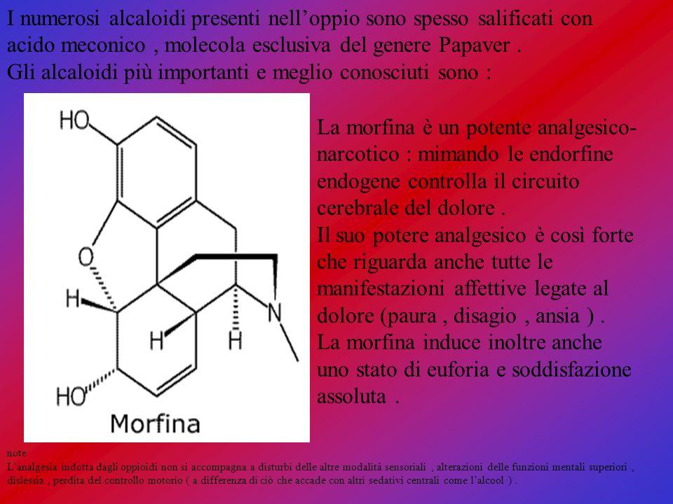 I numerosi alcaloidi presenti nell'oppio sono spesso salificati con