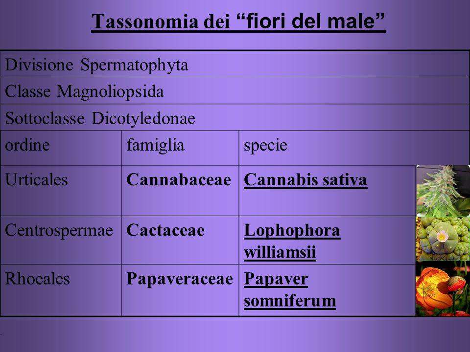 Tassonomia dei fiori del male