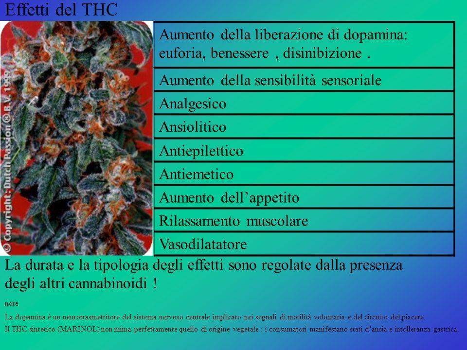 Effetti del THC Aumento della liberazione di dopamina: euforia, benessere , disinibizione . Aumento della sensibilità sensoriale.