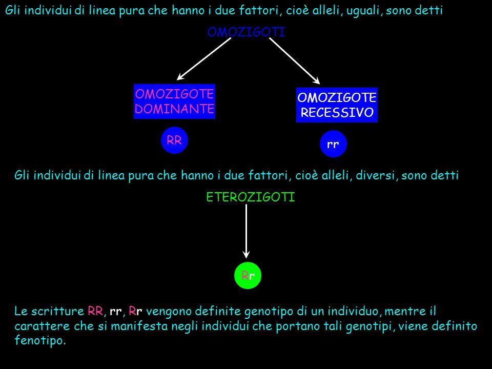 Gli individui di linea pura che hanno i due fattori, cioè alleli, uguali, sono detti