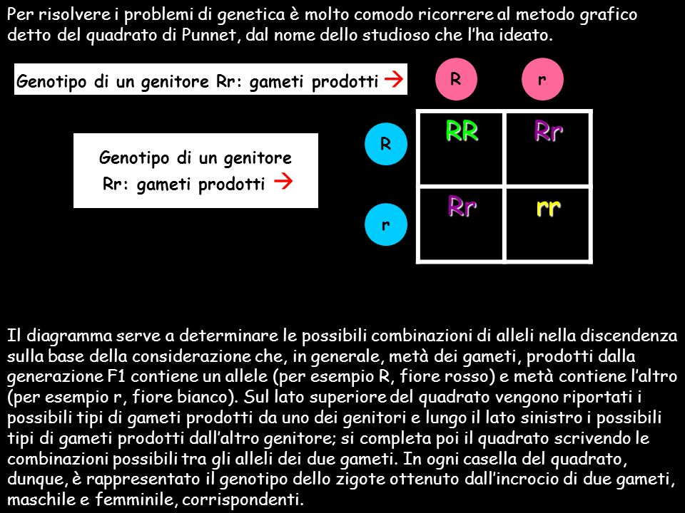 Genotipo di un genitore Rr: gameti prodotti  Genotipo di un genitore
