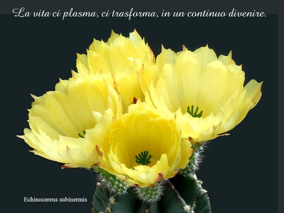 La vita ci plasma, ci trasforma, in un continuo divenire.